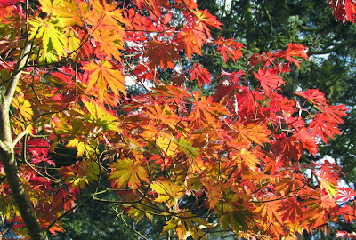 e.e. cummings, autumn, fall, leaves, orange, red, yellow, leaf, tree, blue sky, colours,UK, England, visit, pretty, beautiful, nature, photography color, Roger Ebert, quote