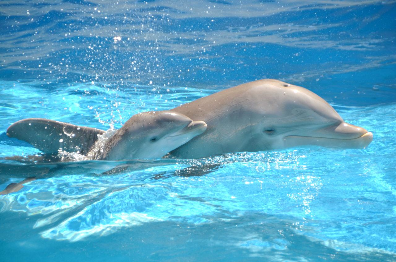 Baby dolphin - photo#7