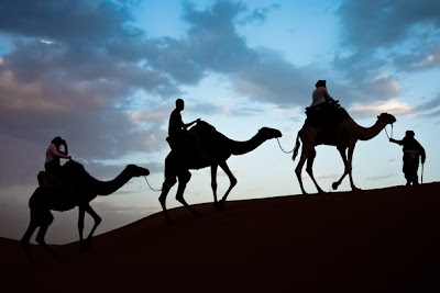 riding camel, Desert, sahara