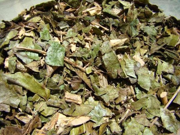 Chá de bugre emagrece mesmo?