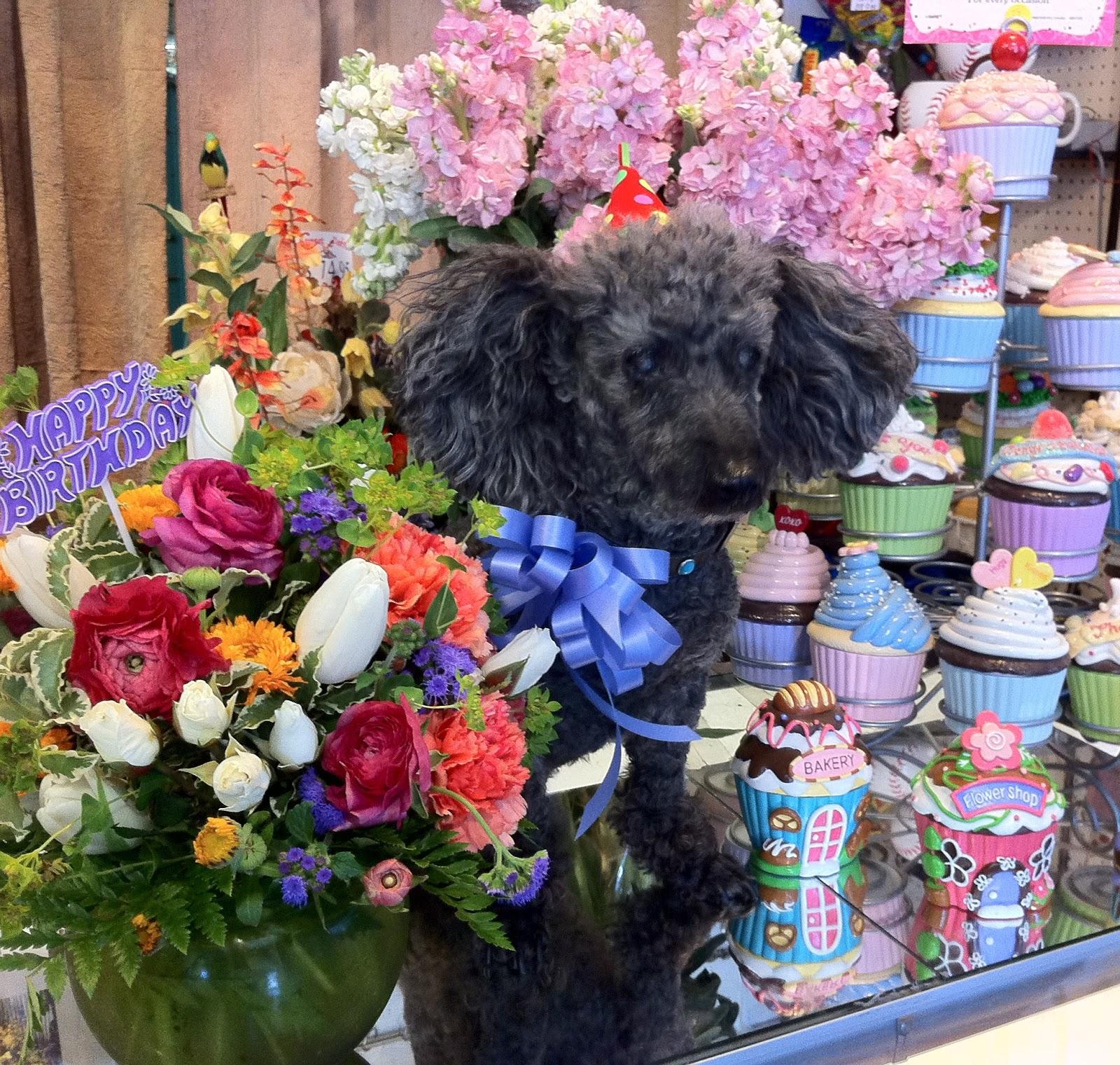 The Enchanted Petal Dog Flowers