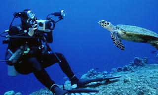 Plongée avec les tortues à Raja Ampat, scuba diving in raja ampat