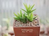 http://finfingarden.blogspot.com/2014/12/haworthia-cactus-succulent-cacti-nature_8.html