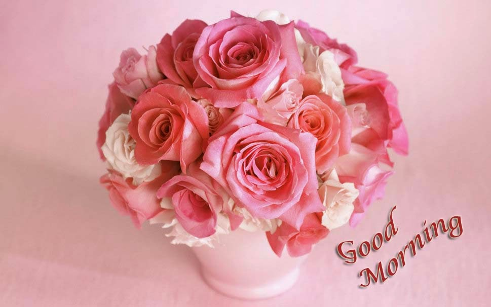 Good Morning Beautiful Pink Roses : Images about bonjour bonsoir bon week end