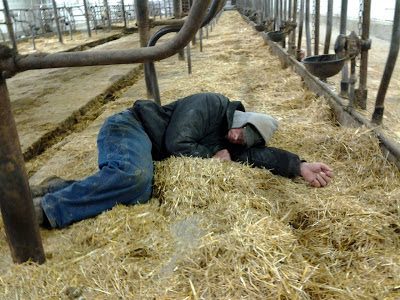 dairy farmer sleeping on rubber mattress in tiestall barn
