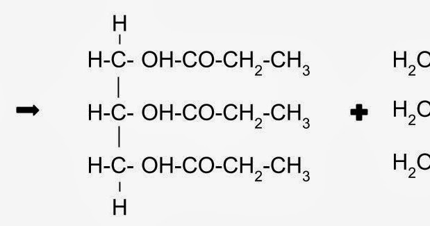 as biology  glycerol and fatty acids combine by