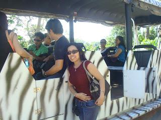 safari train in zoobic safari