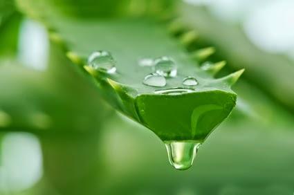 Benefits of Aloe Vera for Health