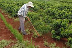 O mito da eficiência do agronegócio