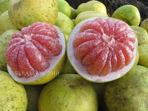 Image result for gambar tomat, anggur merah, jeruk bali
