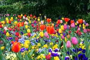 Las flores en los sueños
