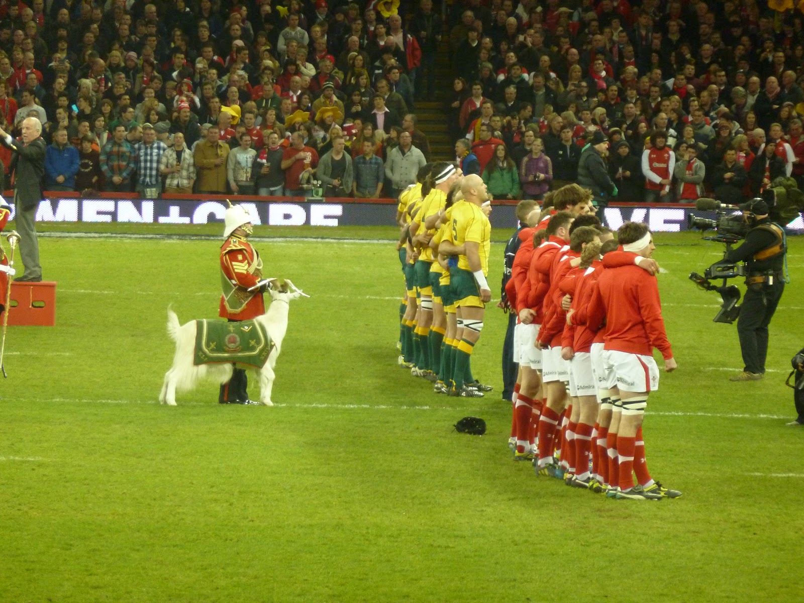 Wales Australia Goat