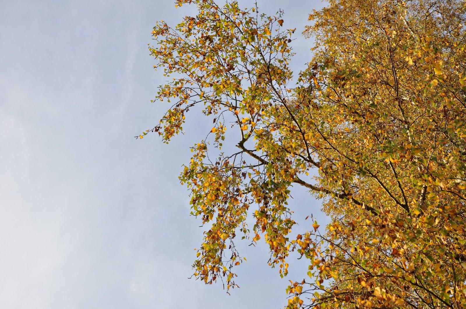 Herbst-Impressionen | Herbstlicher Baum mit gefärbtem Laub in der Spätsommersonne