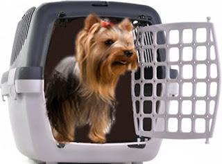 Il trasportino per portare con noi il cane o il gatto