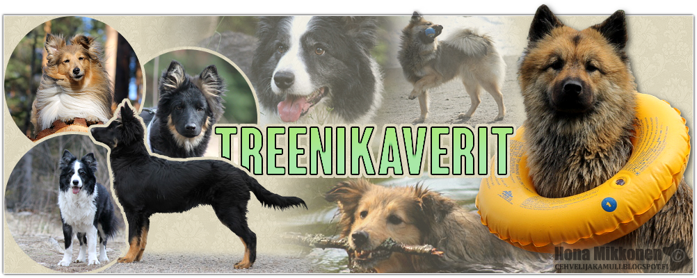 Treenikaverit