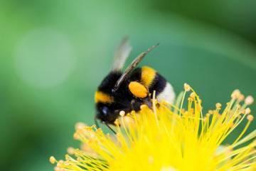 Sifat Teladan Lebah bagi Manusia