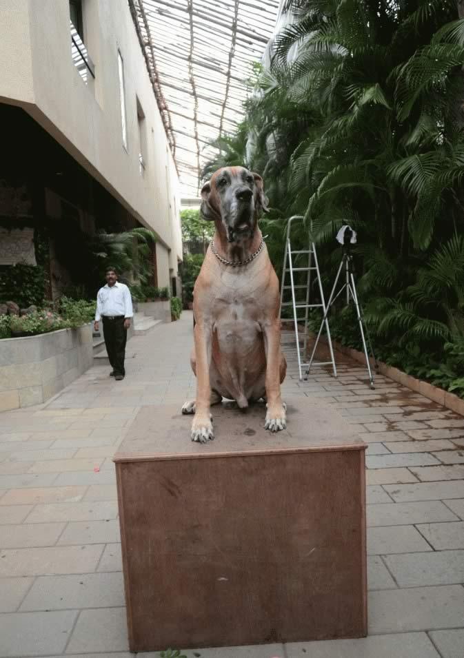 Amitabh Bachchan Dog Name