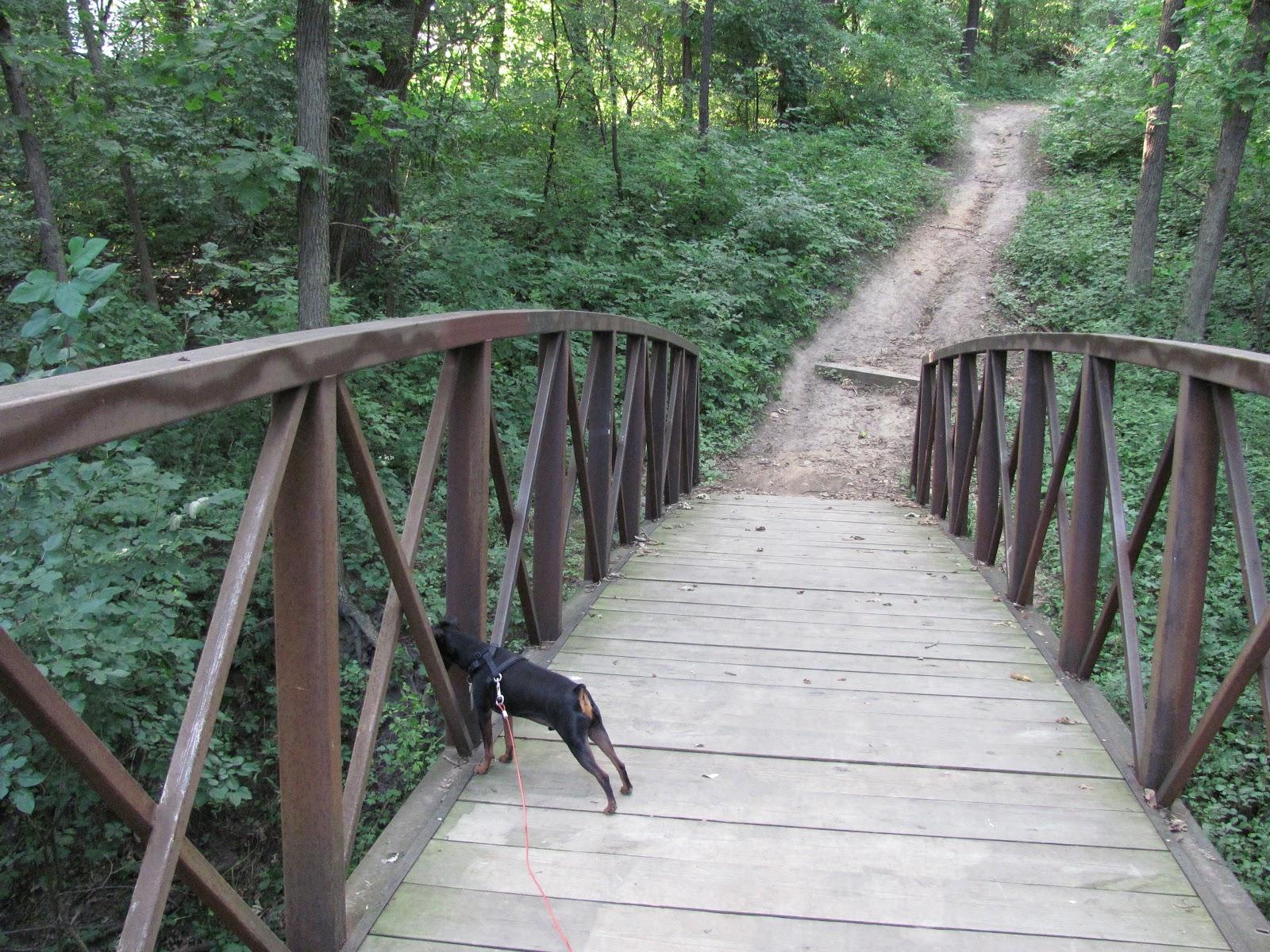 Shuttering For Bridges : Lensing and shuttering buddy on schmoeger park bridge