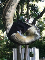 Giant Python Eating Huge Bat