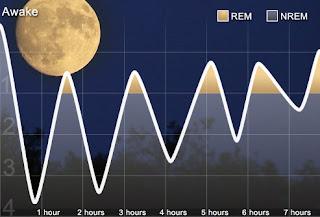 Az alvás szakaszai