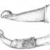 Slides: Cirurgia da Acrobustite em zebuínos
