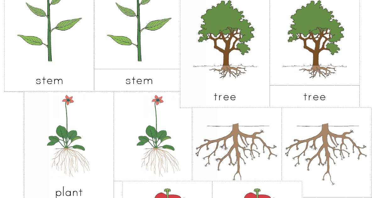 The Helpful Garden Montessori Botany Nomenclature Set For Primary 3 6 Years