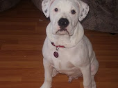 Mi perro Tyson