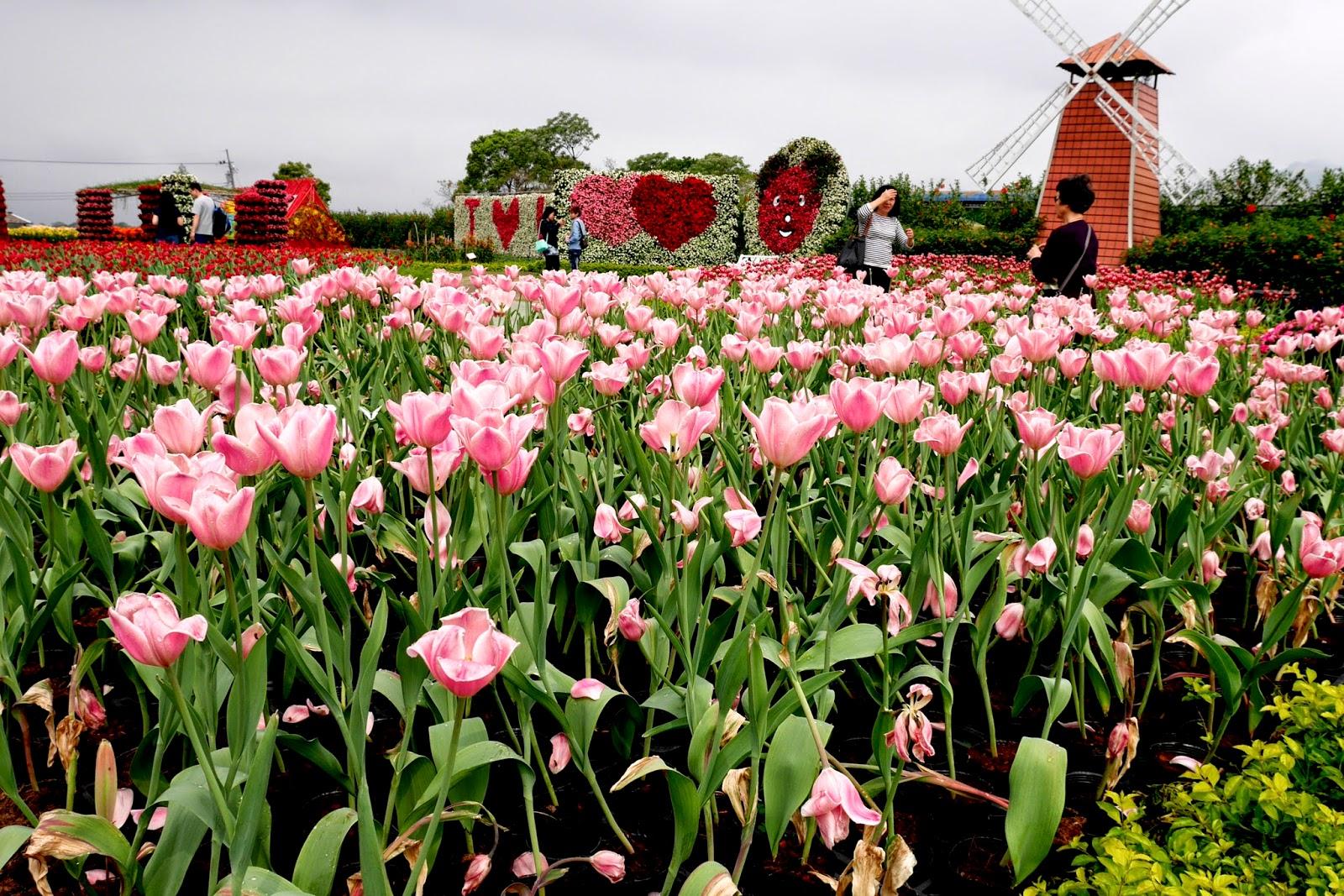 Taiwan Flowers