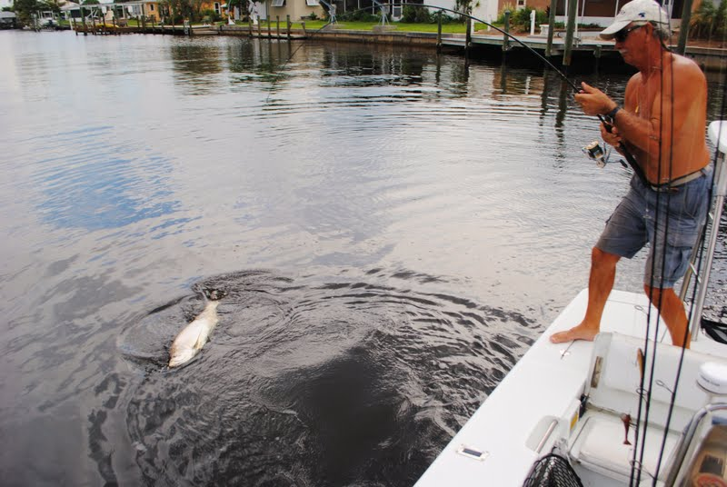 the pine island angler tarpon fishing in the cape coral