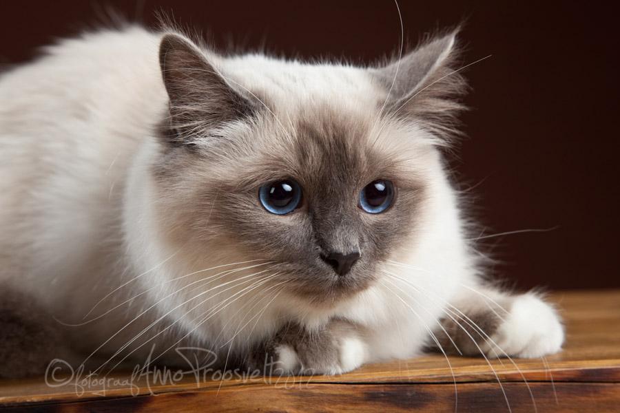 kass-lemmikloom-pildistamas-fotostuudios