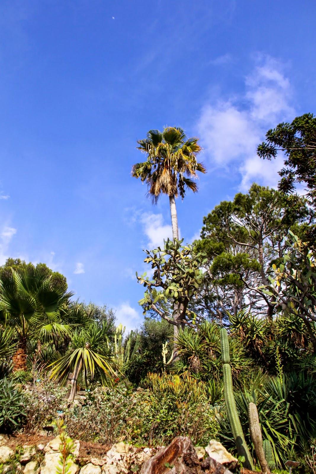 villa ephrussi de rothschild, saint-jean cap ferrat,riviera,hello riviera,cactus, jardin exotique