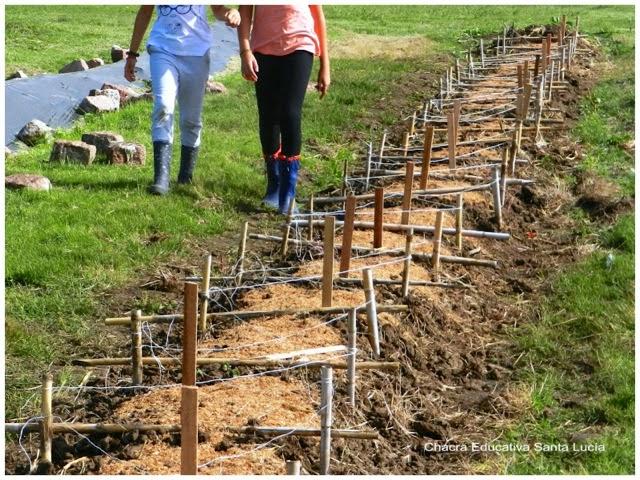 Canteros protegidos con mulch - Chacra Educativa Santa Lucía