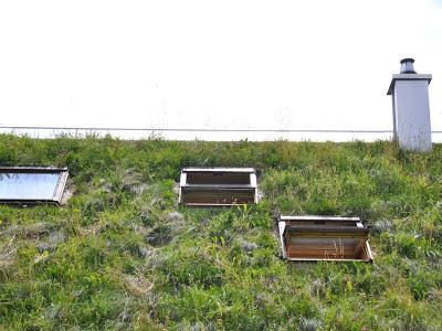 Покрытие крыши травой экологично и шумоизоляция одновременно