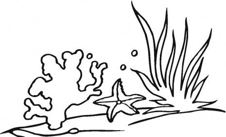 Menta m s chocolate recursos y actividades para for Ocean plants coloring pages