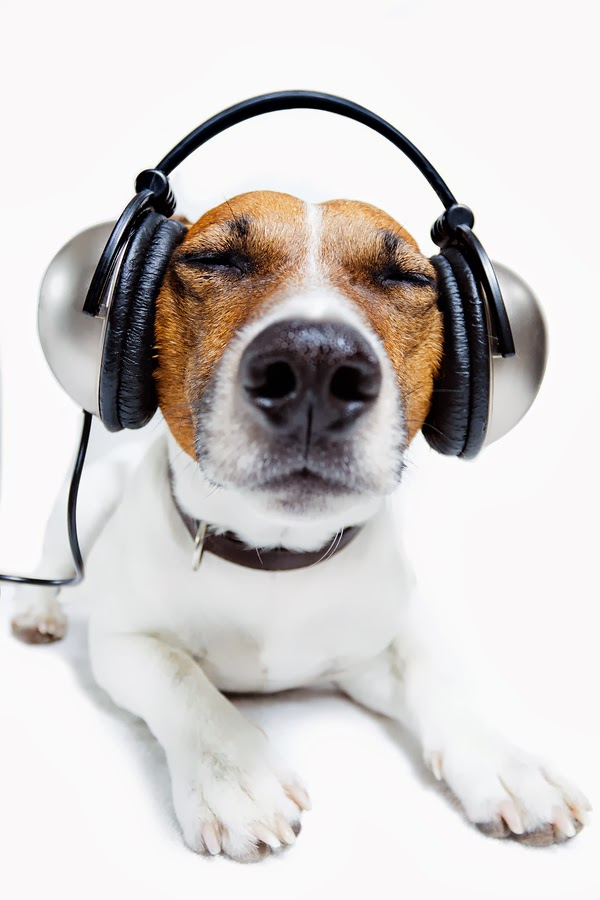 how to get my dog to listen to me