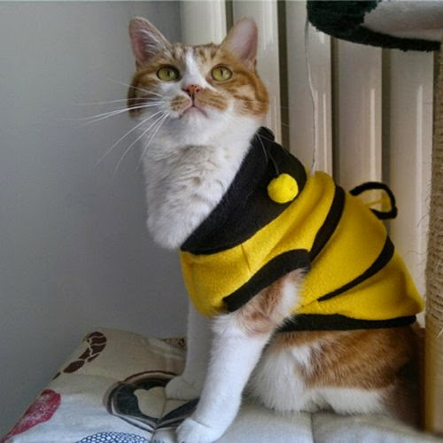 Cat Halloween Costumes - Bumble Bee Dress Up Costume