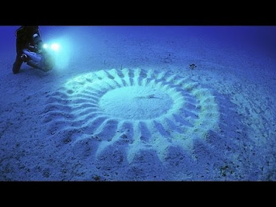 Crop Circle Ini Berada di Bawah Air, Bagaimana Bisa?