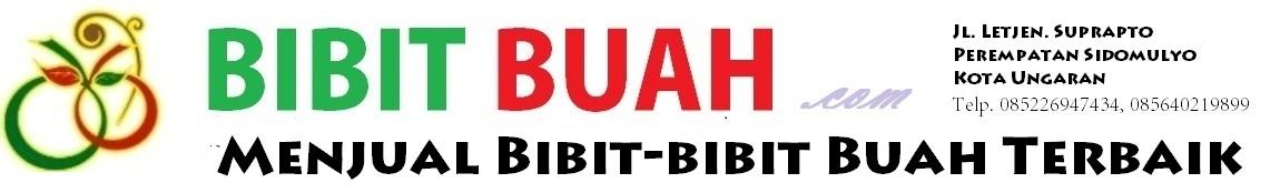 Bibit Buah