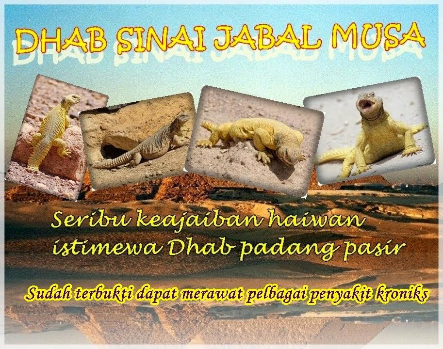 DHAB SINAI JABAL MUSA