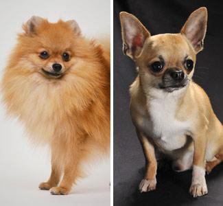 News Feed: Hybrid Dogs