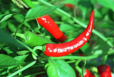 فوائد الفلفل الحار والفلفل الحلو health benefits of pepper