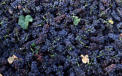 Uvas - Grapes (Wallpaper de 1920x1200px)
