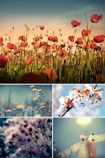 Цветы обои фото цветов