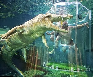 5 Jenis Buaya Terbesar Di Dunia Dunia Buaya Dan Alligator