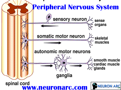Neural Tissue PPT