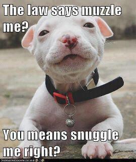 snuggle+me.jpg