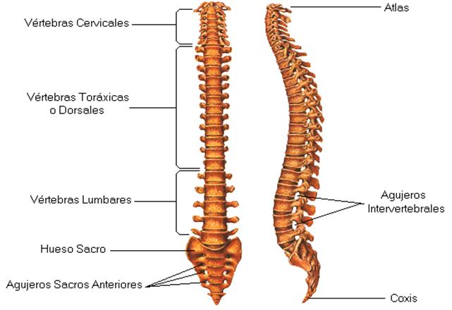 Como quejarse del dolor en la espalda