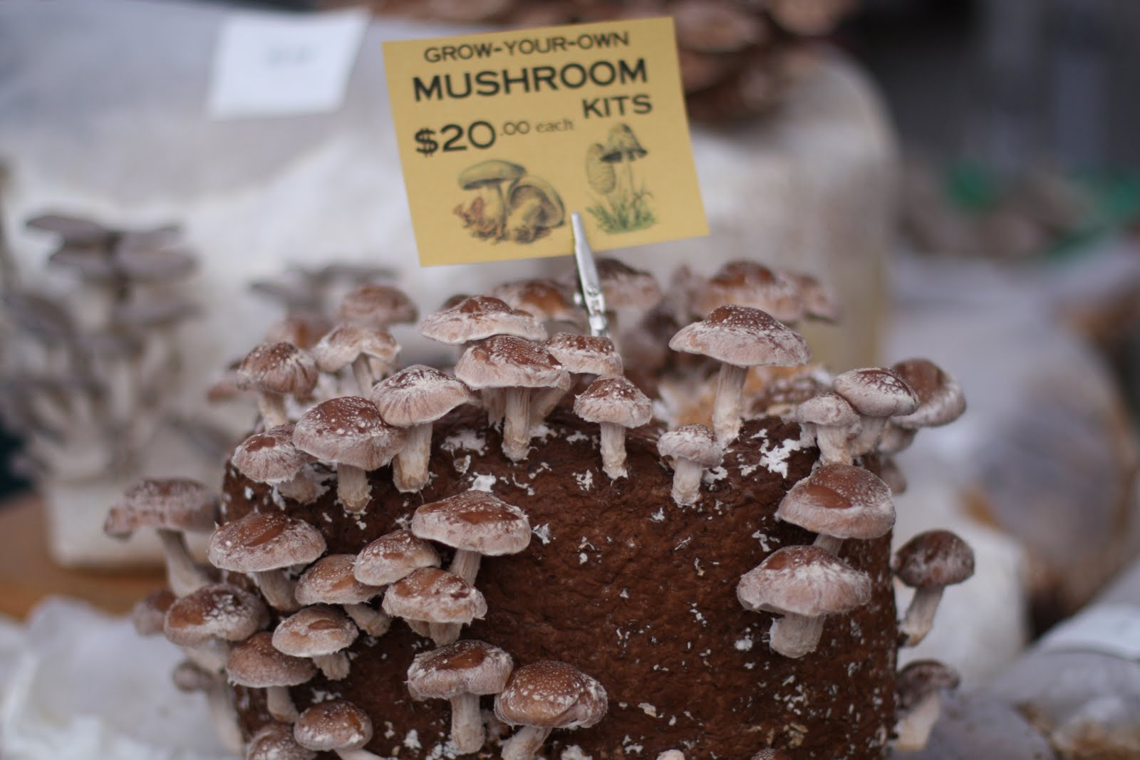 Food Connections: The Soup Project: Winter Mushroom Soup ...
