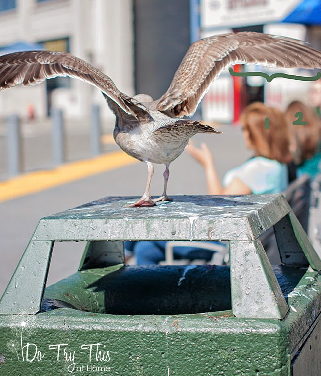 Do Try This at Home: San Francisco...home to giant, giant sea gulls