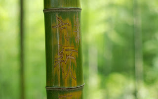 Wood Bamboo Green Stem Characters Background HD Wallpaper